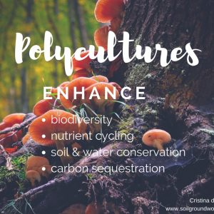 Polycultures Positive Effect on Soil
